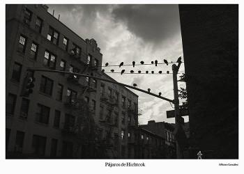 Nueva York, pájaros de ciudad
