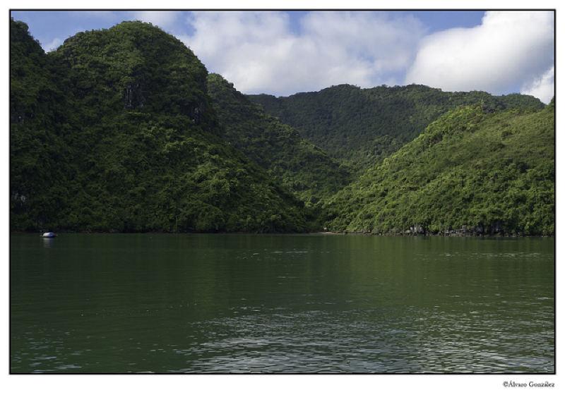 Densa vegetación en una de las islas de la Bahía de Halong, Vietnam