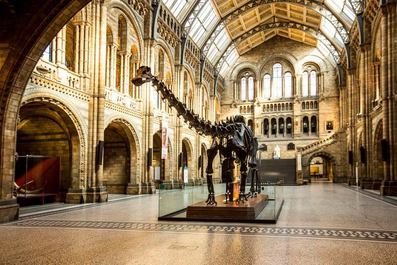 museo de historia natural, cosas gratis en londres