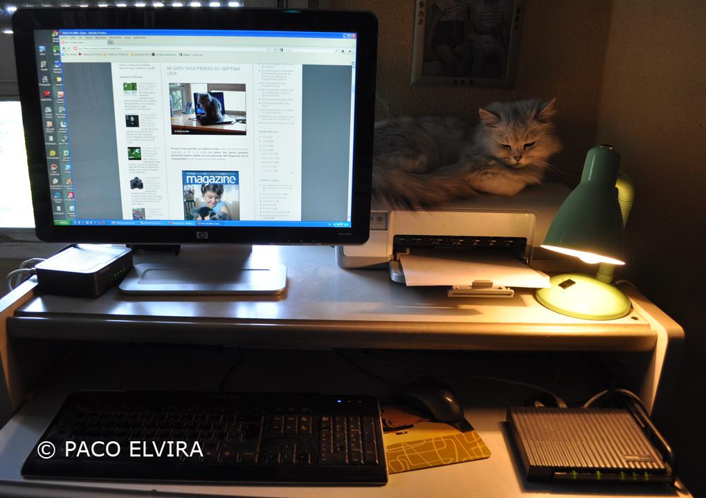 Canela sobre el ordenador de Paco Elvira