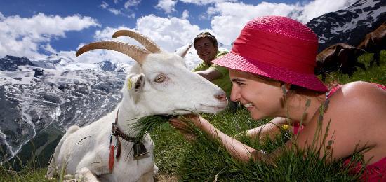 turismo familiar en los alpes suizos, saas fee