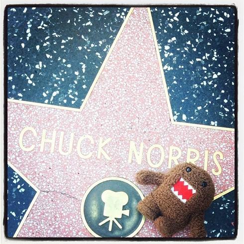 Chuck Norris siempre fue un peluchito.