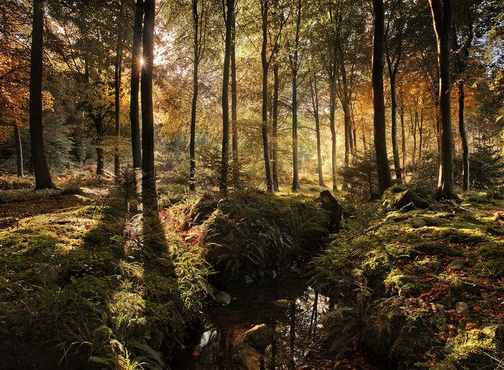 tollymore forest, ruta de juego de tronos por Irlanda del Norte